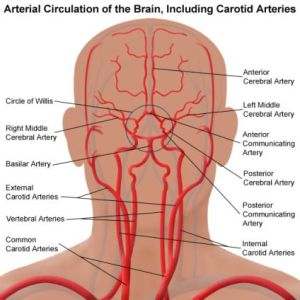 Alzheimer e sistema vascolare